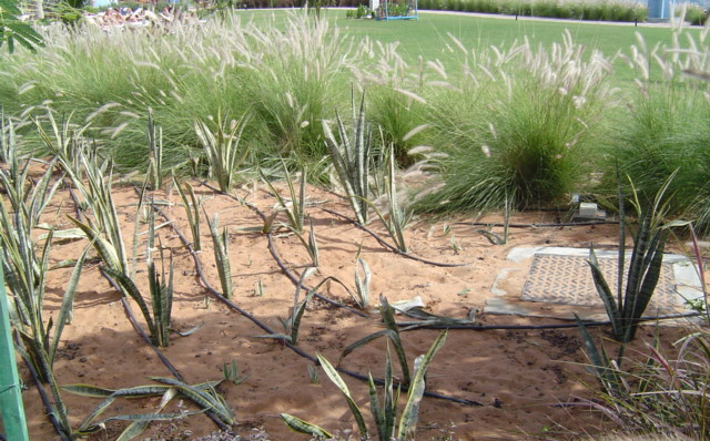 Drip irrigation – Everyone should be using it.